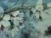 flor-de-lmendro
